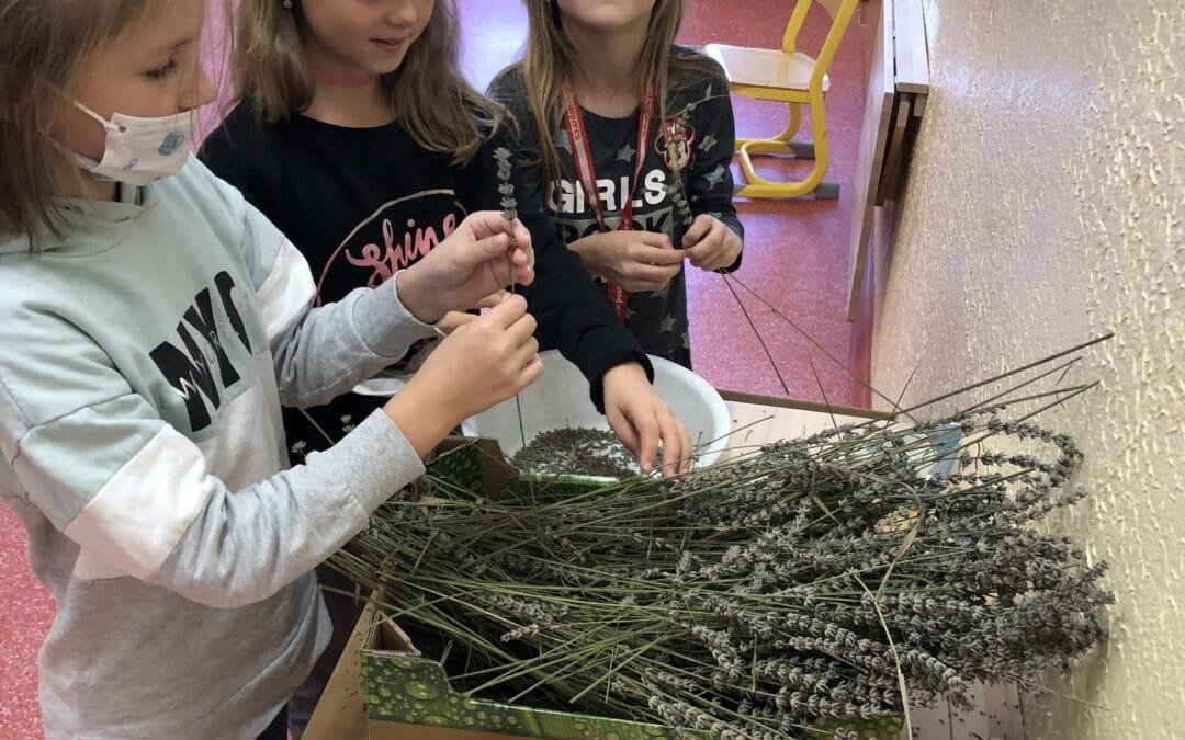 1.M a 2.M Jak jsme zpracovali levanduli, šití pytlíčků a korálky :)